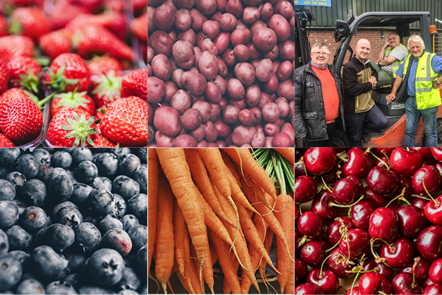 K&M Fruit and Veg | Wholesale Fruit and Veg Dublin